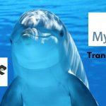 Nodejs Mysql Transactions